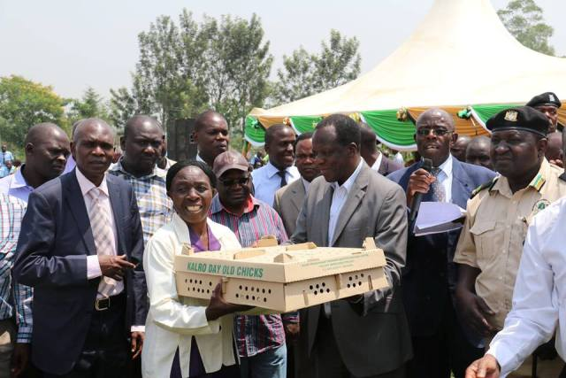 Improved indigenous poultry to boost the economy of Kakamega County